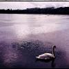 Communauté d'Agglomération Grigny / Viry Chatillon : Fête des Lacs de l'Essonne