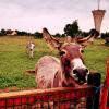 Ferté Alais : La ferme écologique en folie